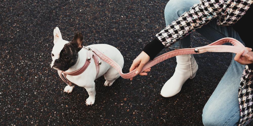 Chien chien @Alizee Omaly (6).jpg