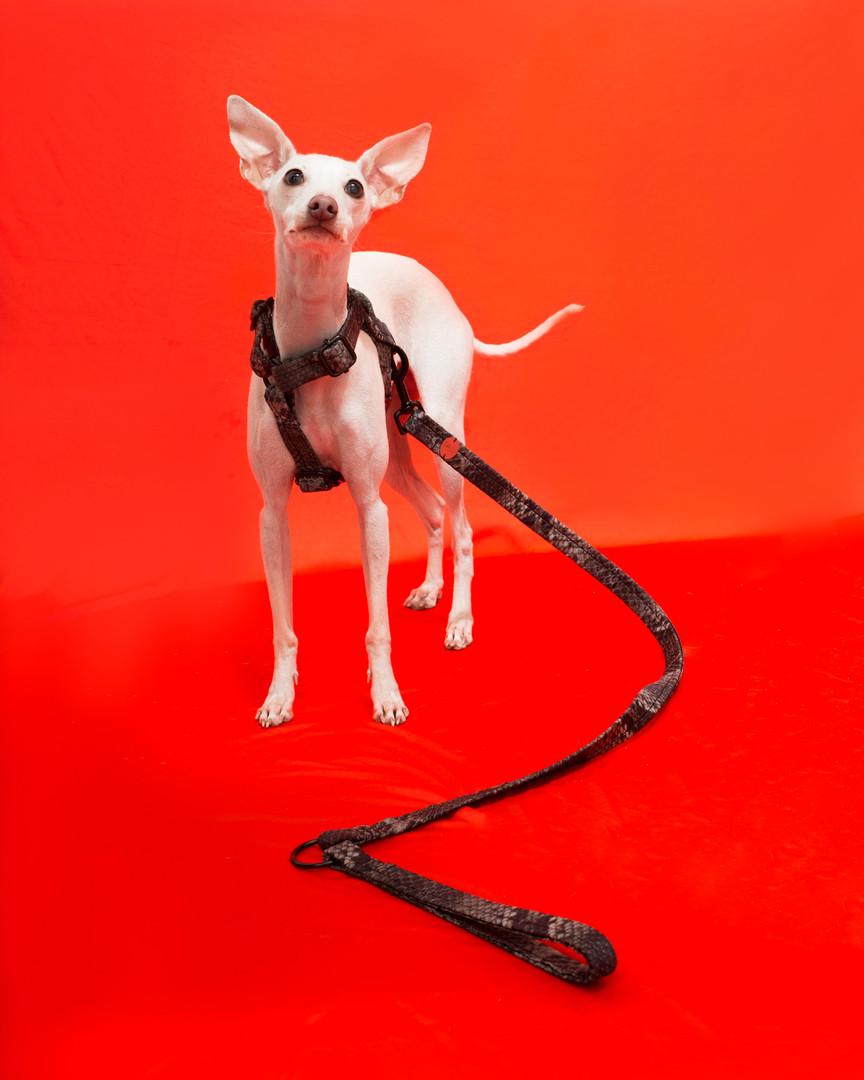 lookbook-safari-chien-chien--29.jpg