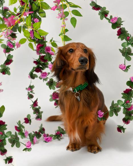 chien-chien-lookbook-bloom-28.jpg
