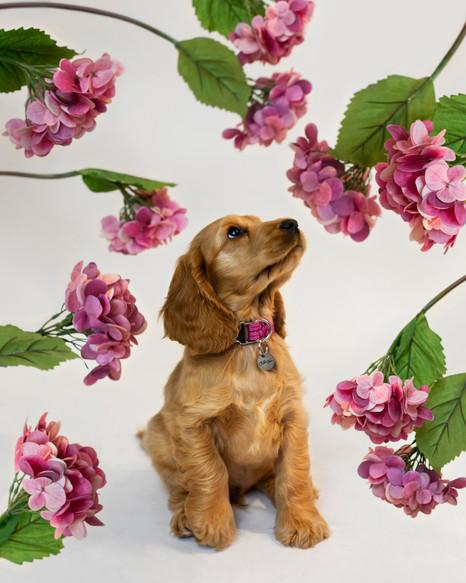 chien-chien-lookbook-bloom-46.jpg