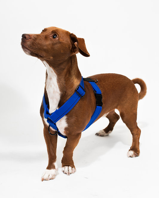 COBALT HARNESS