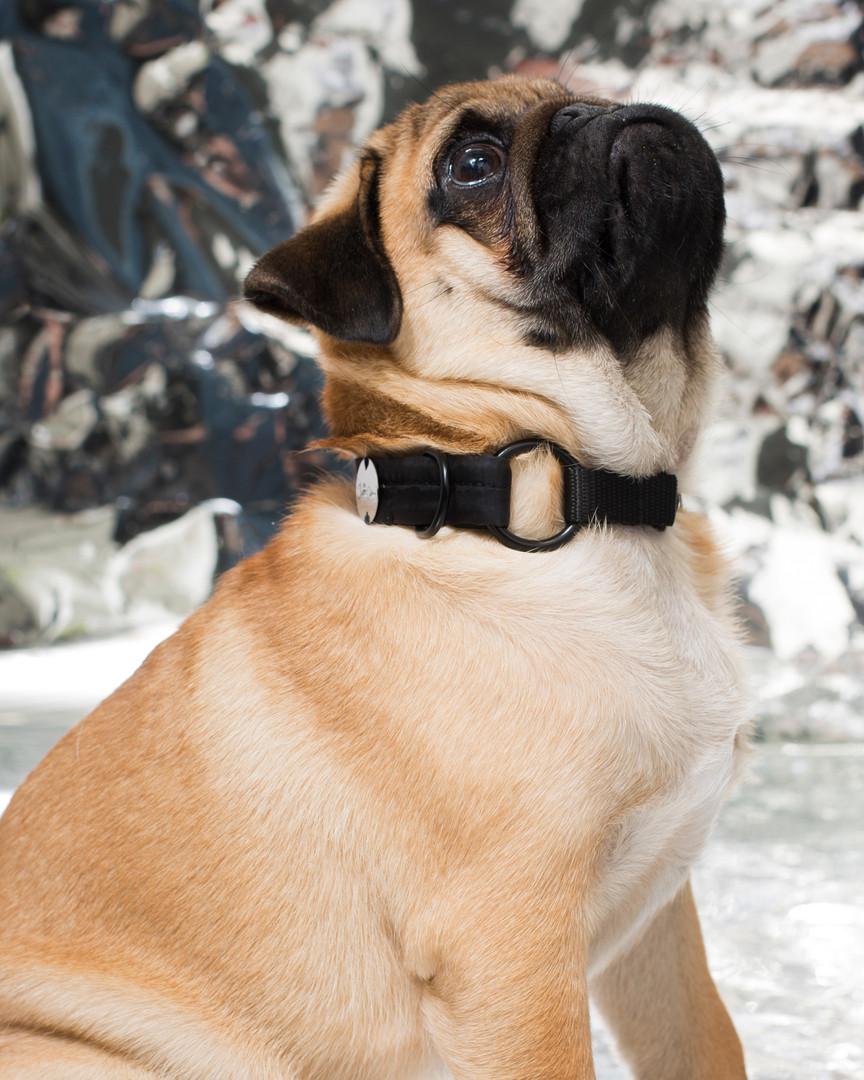 lookbook-chromatic-chien-chien-22.jpg