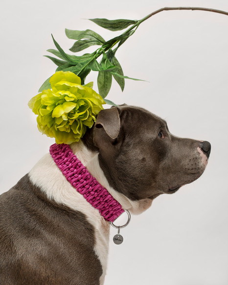 chien-chien-lookbook-bloom-1.jpg