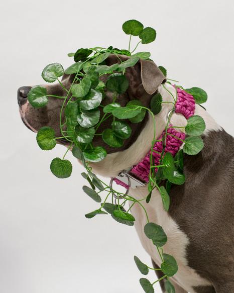 chien-chien-lookbook-bloom-9.jpg