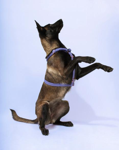 lookbook-jewel-chien-chien-10.jpg