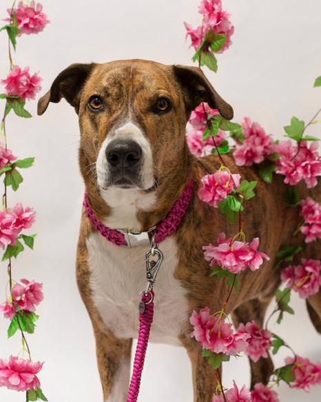 chien-chien-lookbook-bloom-27.jpg