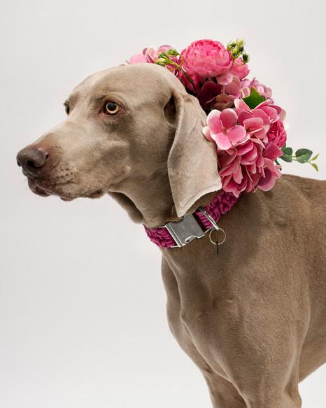 chien-chien-lookbook-bloom-63.jpg