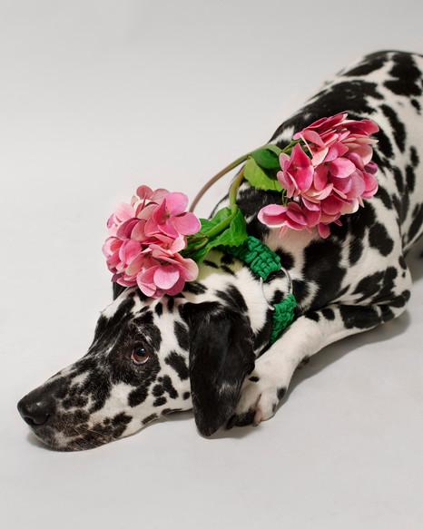 chien-chien-lookbook-bloom-34.jpg