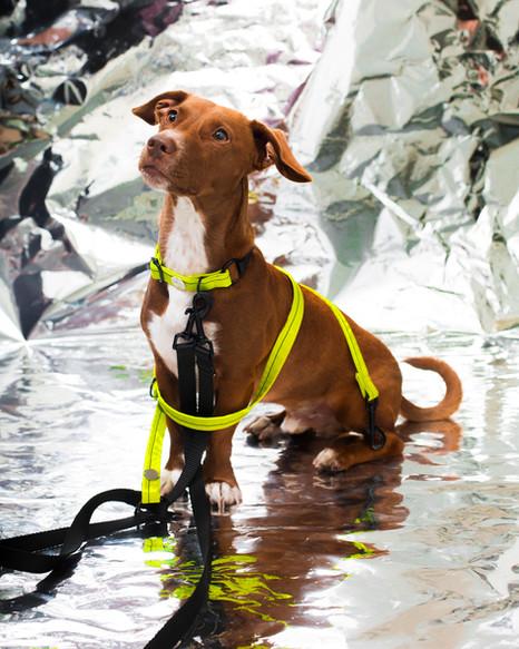 lookbook-chromatic-chien-chien-23.jpg