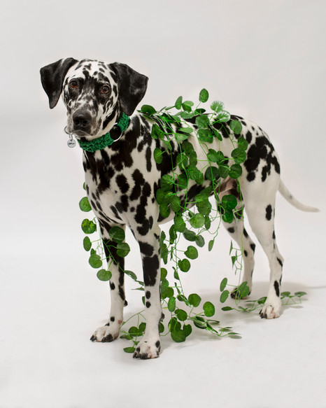 chien-chien-lookbook-bloom-39.jpg
