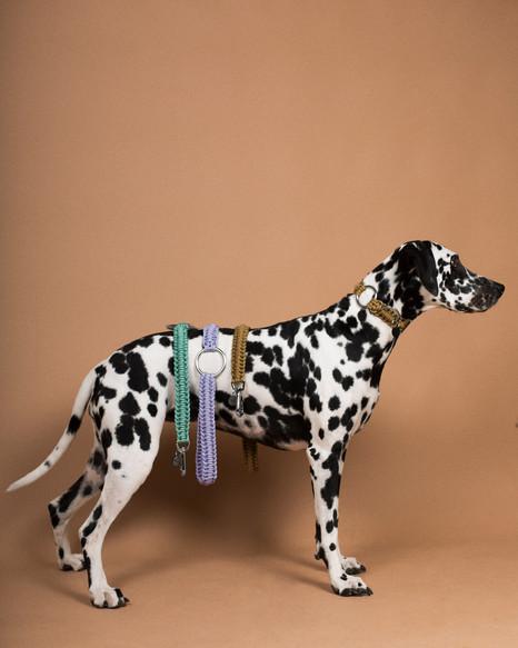 lookbook-paracord-chien-chien-11.jpg