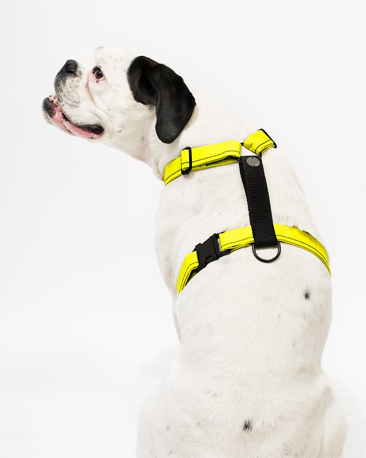 LIME HARNESS
