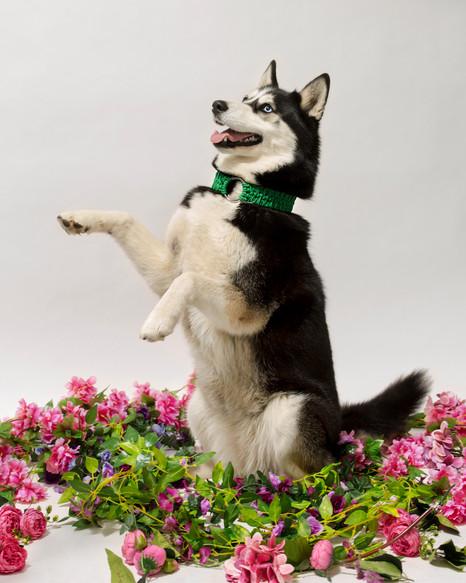 chien-chien-lookbook-bloom-41.jpg