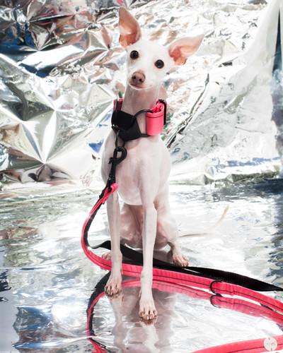 lookbook-chromatic-chien-chien-26.jpg