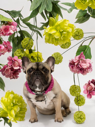 chien-chien-lookbook-bloom-61.jpg