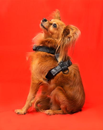 lookbook-safari-chien-chien--6.jpg