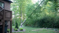 TreeMaster-4