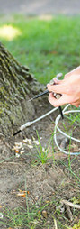 deep root fertilizing.jpg