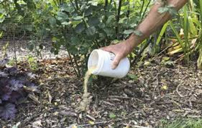 Soil analysis affordable nashville tree