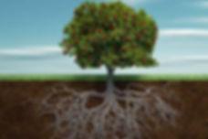 deep root fertilizing diagram.jpg