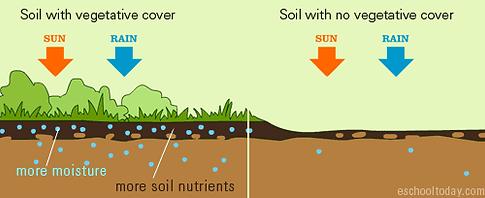 nashville tree Service soil management s