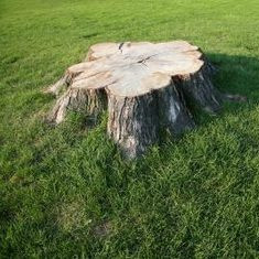 stump in the way_edited.jpg
