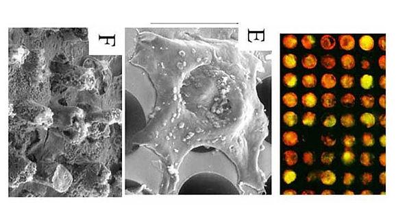 Wang_2014_LabChip_Microstructures_pubima