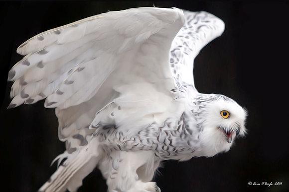 Snowy Owl Oil