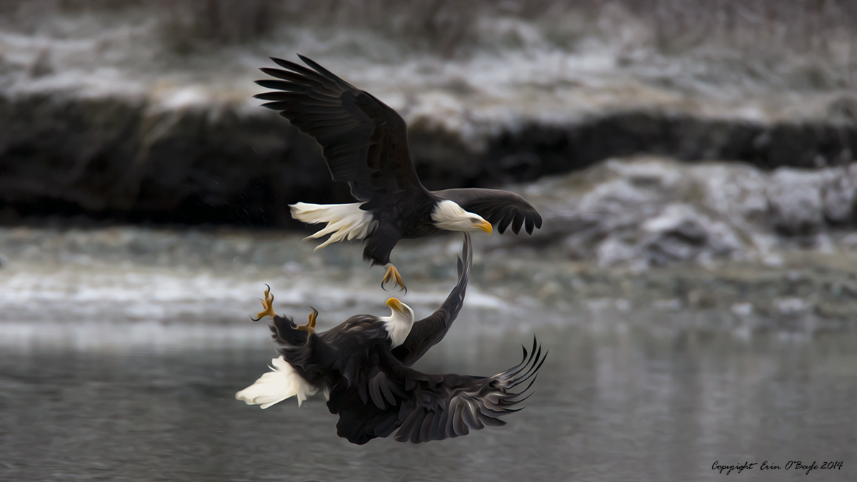 Inverted Eagle Attack as Art