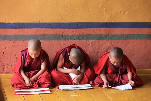 Studious Monks