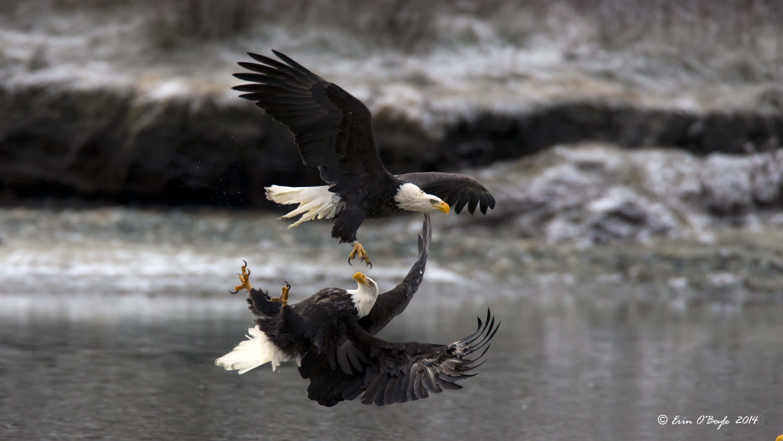 Inverted Eagle Attack