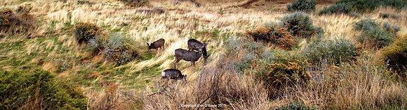 Zion Deer