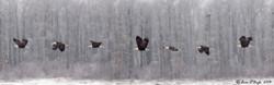 Bald Eagle Flight Study