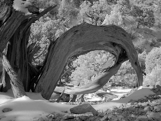Deadwood I