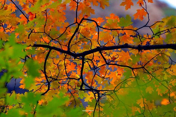 Fall at Zion