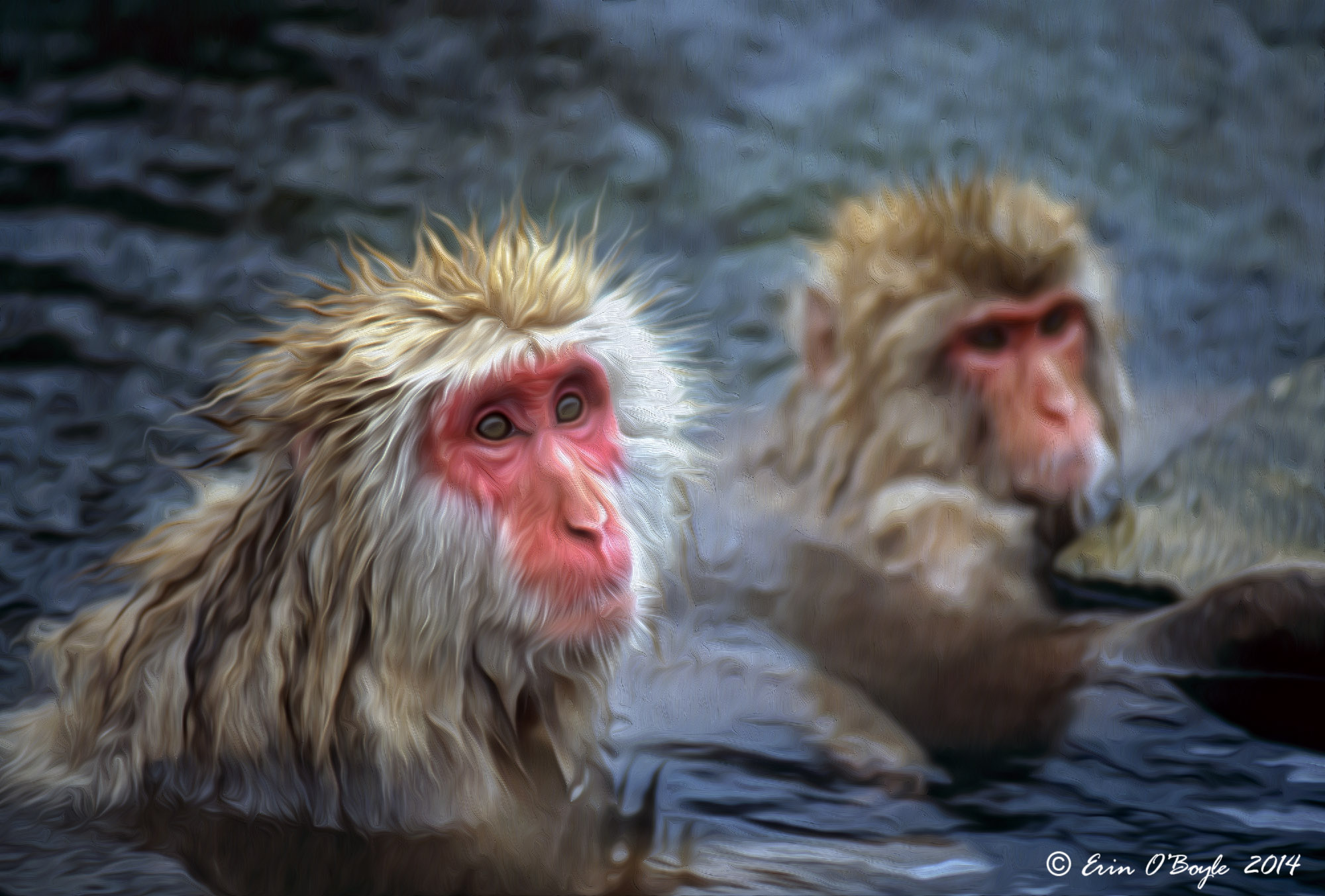 Snowmonkeys Interpreted