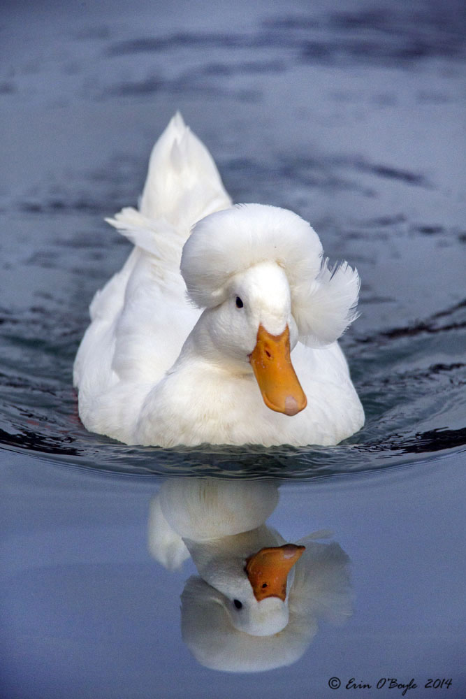 Ethel the Duck