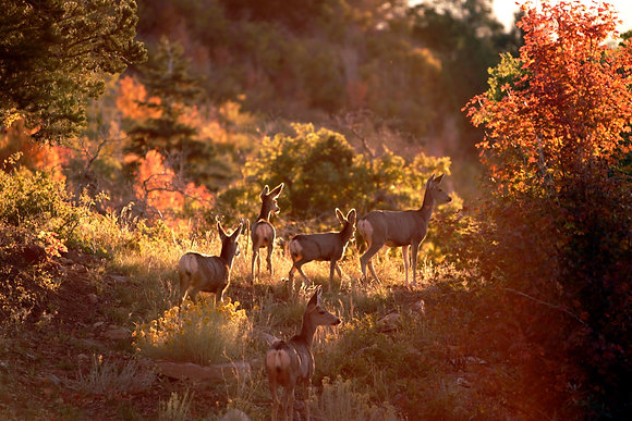 Deers at Day End