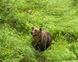 Bear Portraite