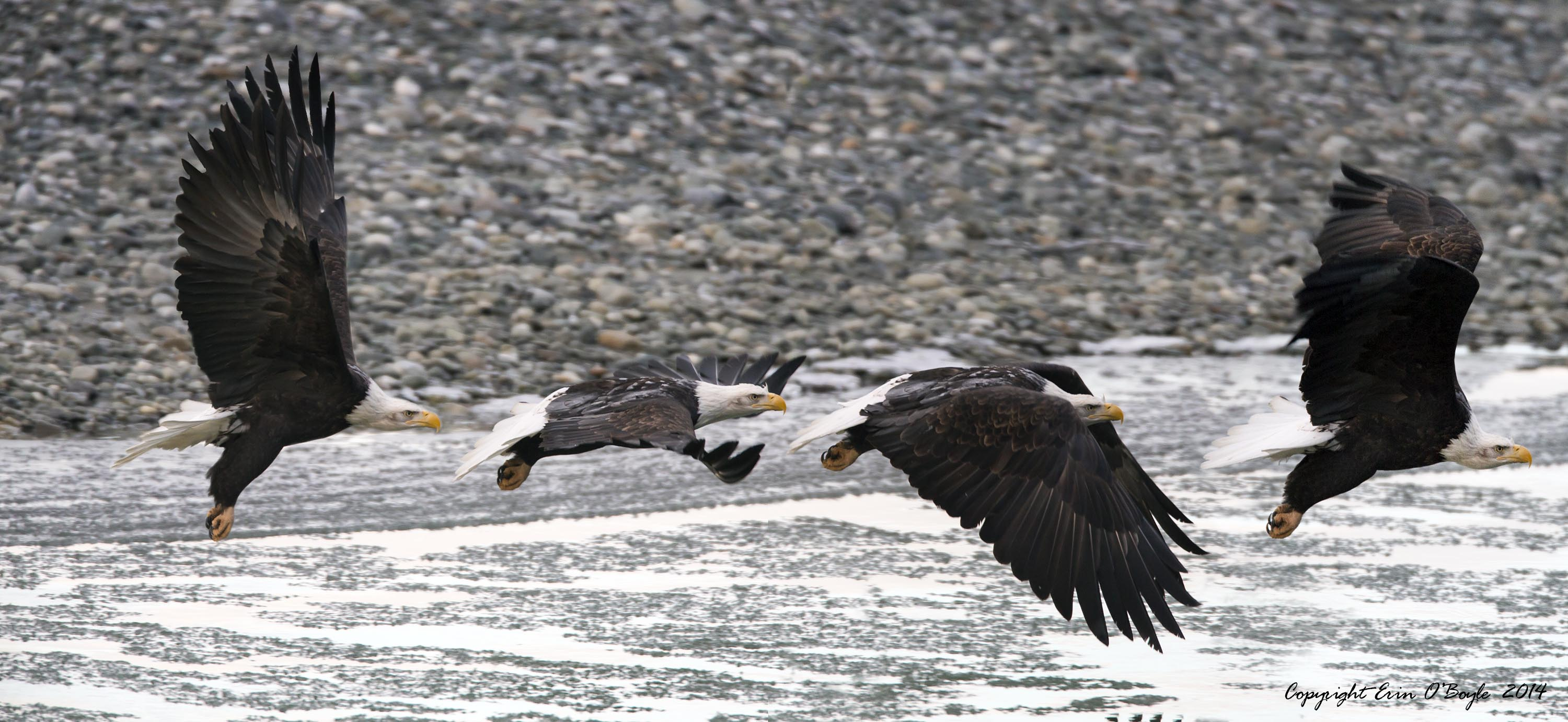 Eagle Flight Sequence
