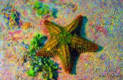 star +sat+ripple.jpg