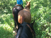 Ponying on the Trail