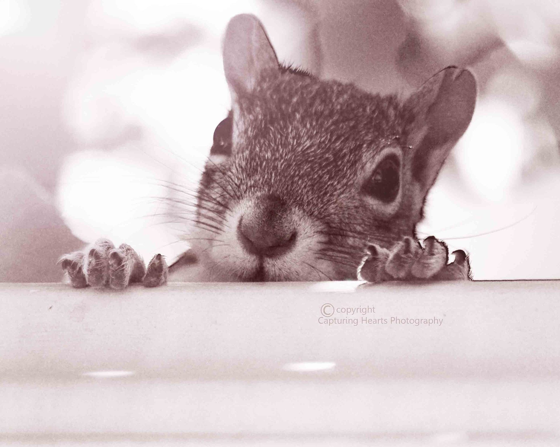SquirrelPhotographyAnimalsNatureCOPYRIGHTSCREEN