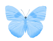 Butterfly projekt mimmi front.png