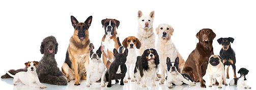 Dog-Breed-Training