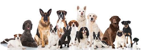 Dog-Breed-Training
