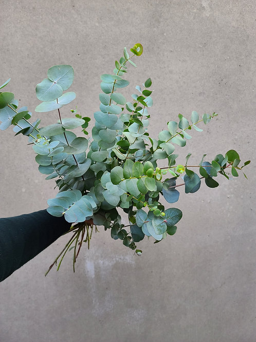 Local Eucalyptus Bundle
