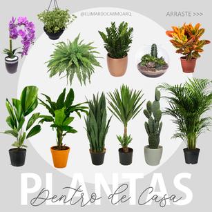 12 PLANTAS PARA DECORAR DENTRO DE CASA