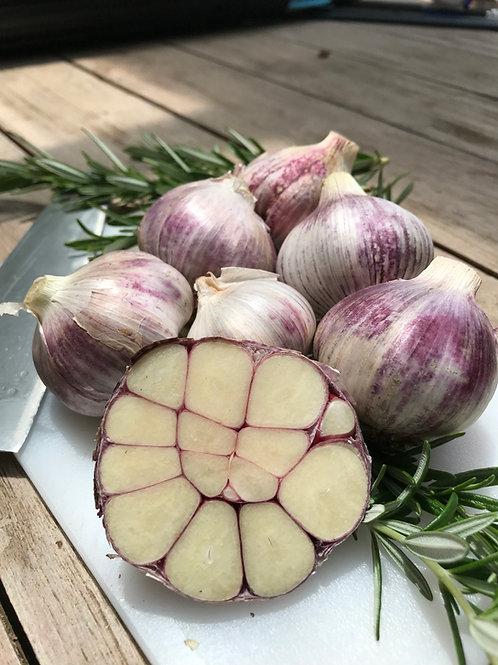 Flinders Island Purple Garlic