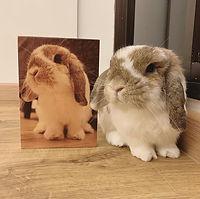 AAGWOOD Influencer-Stella (Rabbit Ugs) -